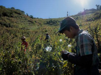 Myanmars Drug Epidemic