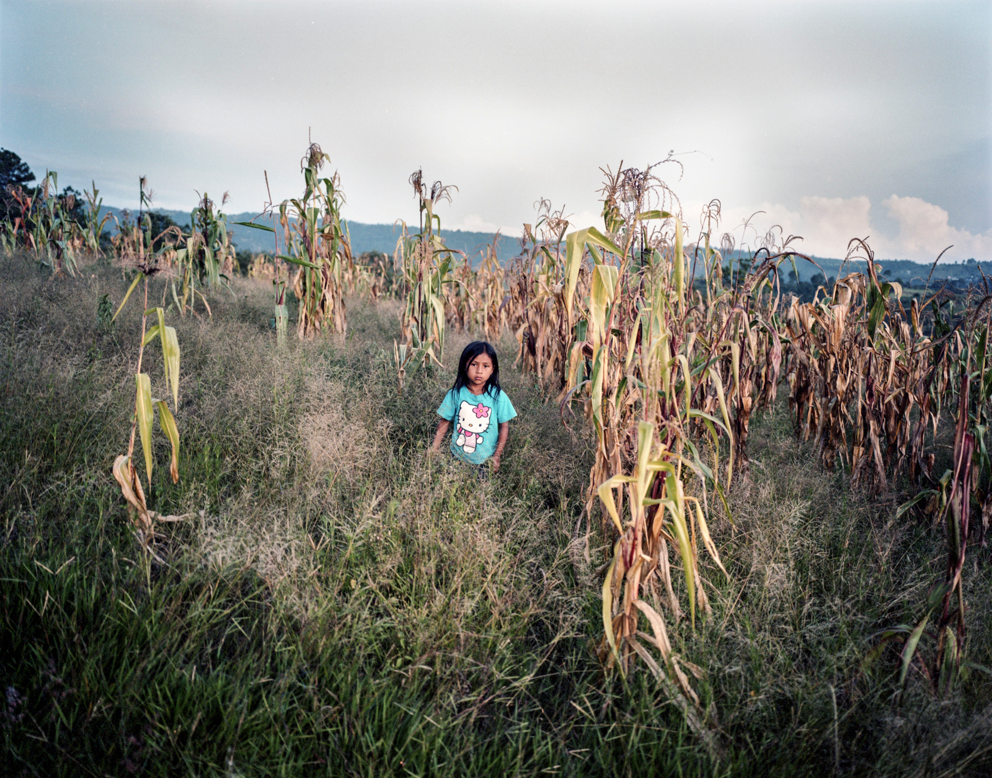 Edilia Varrera Teletor (7), stands on a dried out corn field in Aldea Las Rosas, QuichŽ, Guatemala. She is malnourished and so is her two-year old sister. The family lacks access to land so they have to buy everything they eat at the local market. They usually eat tortillas, salt and beans. Photo: Jesper Klemedsson / Kontinent
