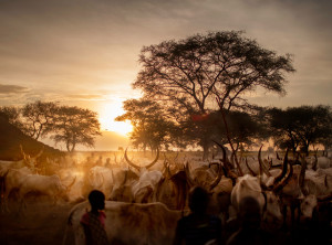 The Dinka people